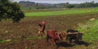 Ethiopian farmer at work (Courtesy of http://newbusinessethiopia.com)