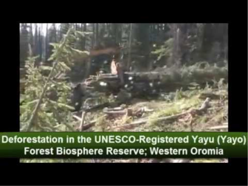 Massive Deforestation of Western Oromia's forest